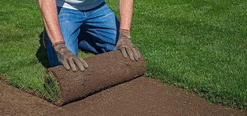 Как да положите тревните рула