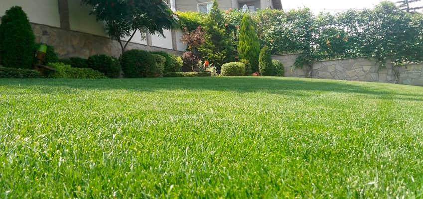 Тайните на тревният килим