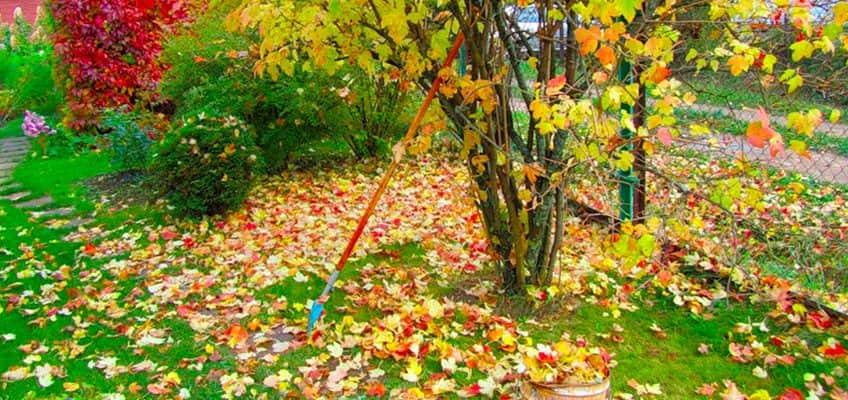 есенни грижи за тревата