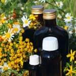 Растенията - подправки и билки
