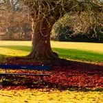 Как да запазим тревният килим като кадифе до пролетта