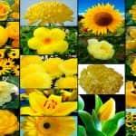 Въздействието на багрите - цветя и цветове