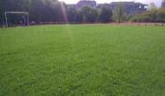 предимства на тревния чим