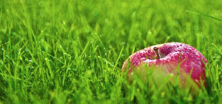 Райграс или тревна смеска