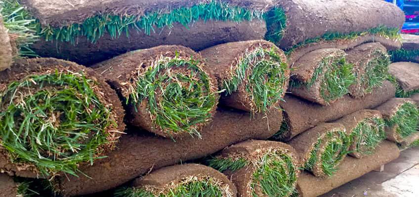 Тревен чим – как да се справим сами